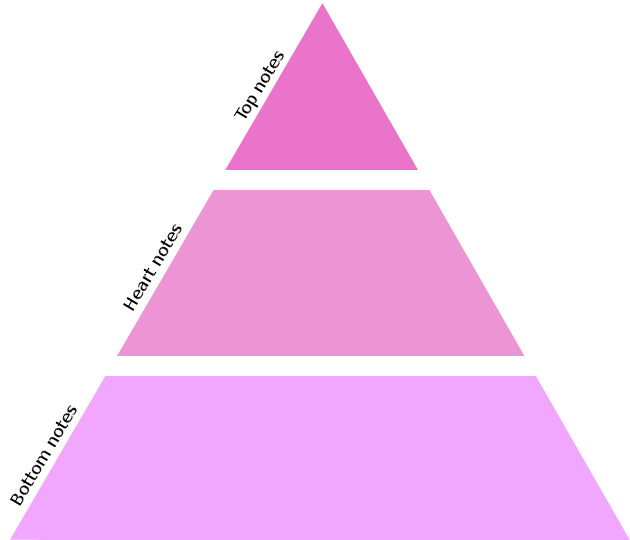The olfactive pyramid